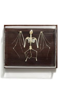 Kind of tempted to get this for Seamus  The Evolution Store Bat Skeleton available at #Nordstrom