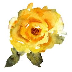 size: Stretched Canvas Print: Yellow Rose by Rachel McNaughton : Using advanced technology, we print the image directly onto canvas, stretch it onto support bars, and finish it with hand-painted edges and a protective coating. Painting Edges, Painting Prints, Art Prints, Watercolor Flowers, Watercolor Art, Framed Artwork, Framed Prints, Rose Art, Stretched Canvas Prints