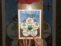 Life Cycle of a Plant Anchor Chart - YouTube