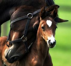 Mama +baby=love
