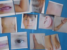 Body Parts Photo Flash Cards- great for learning vocabulary on spring topic through different matching picture to picture activities and memory games as well as for reading and spelling activities. It is a good resource for students with autism and special needs. For more great resources follow https://www.pinterest.com/angelajuvic/autism-special-education-resources-angie-s-tpt-sto/