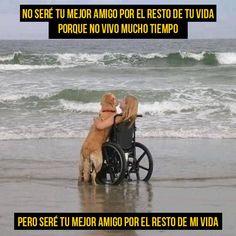 amor-a-los-perros21