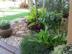 1000 images about jardin seco dry garden xeriscape on for Low maintenance tropical garden