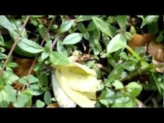 Wasp attacks butterfly - YouTube