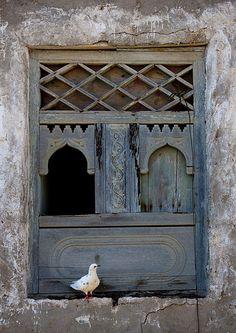 Bird on an old wooden window in Mirbat, Oman