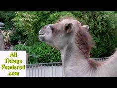 http://www.allthingspondered.com   Heidelberg Zoo - Video