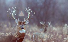 Deer by Camilo Güell, via Behance