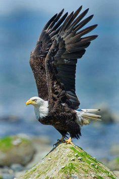 A imagem pode conter: pássaro e céu