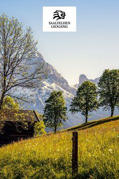 Eine leichte Wanderung mit beeindruckendem Panorama auf die Gipfel der Leoganger Steinberge, des Steinernen Meeres von Saalfelden sowie das Hochkönigmassiv. Berg, Mountains, Nature, Travel, Stones, Naturaleza, Viajes, Destinations, Traveling