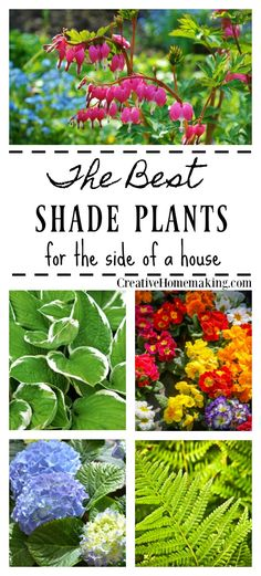 Shade Plants for a Shady Side of a House Best shade plants. A reader asks what shady plants and shrubs she can plant in a shady area of her yard. A reader asks what shady plants and shrubs she can plant in a shady area of her yard. Best Plants For Shade, Shade Garden Plants, Garden Shrubs, Cool Plants, House Plants, Best Shade Flowers, Perennial Flowers For Shade, Flowering Shade Plants, Plants For Shady Areas