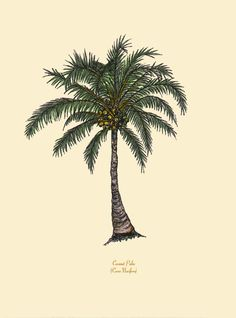 Palm Tree Art Prints - Christmas, Coconut and Foxtail Palms