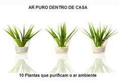 10 Plantas de interior que purificam o ar ambiente
