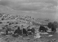 Bethlehem-بيت لحم: PALESTINE - Bethlehem, palestinian shepherd outside Bethlehem,  1939-45