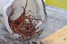 madder root from the A Verb for Keeping Warm dye garden.