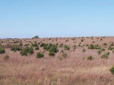 Nature manages native plant communities