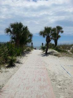 Love this walk to the beach...Hilton Head, SC