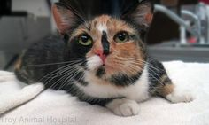 Every calico cat is unique. This is Dinah.