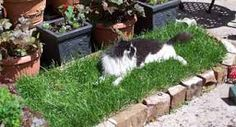 Image result for real grass on balcony