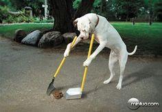 Cachorro limpando seu coco