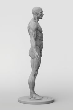 Human Figure Drawing Reference // anatomical collection: male full ecorche figure // - Sculpt and draw with confidence with the help of male écorché reference figure. Zbrush Anatomy, Human Anatomy Art, Anatomy For Artists, Body Anatomy, Anatomy Drawing, Anatomy Male, Anatomy Poses, Figure Drawing Models, Human Figure Drawing
