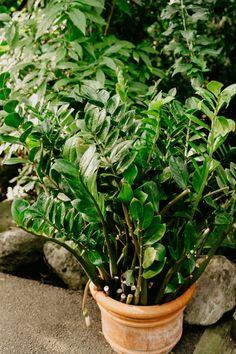 10 Houseplants That Need (Almost) Zero Sunlight Indoor Plants Low Light, Best Indoor Plants, Indoor Herbs, Exotic Plants, West Elm Planter, Perennial Flowering Plants, Household Plants, Growing Plants Indoors, Inside Plants