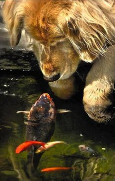 """hello... dog with fish..."" I would love to know the thoughts they are sharing. Look fairly deep. S"