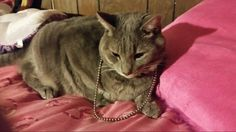 Meet Ty/Tyler my cat