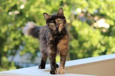 Milu the cat