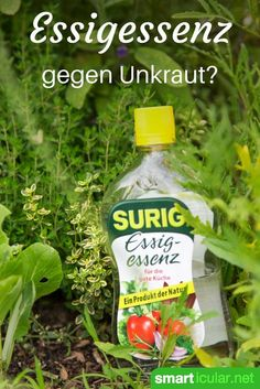 Essigessenz gegen Unkraut – und die sanften Alternativen With vinegar essence can be unpleasant Beikraut fight with little effort. The method also has its disadvantages – you will learn what to look for and which gentle methods are just as effective.
