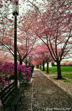 Rebirth - #Spring