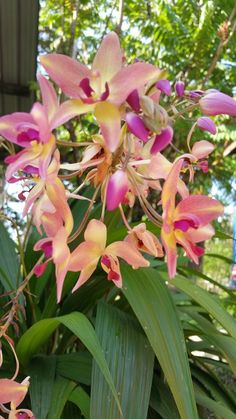 Orchids - Orquídeas - Community - Google+