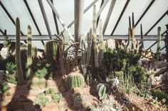The Barbican Conservatory | The Garden Edit