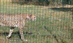 Zoo Chorzów