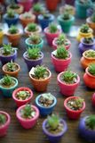 Cacto miniatura en plantadores coloridos Imagenes de archivo