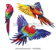아트 스톡 사진 : Shutterstock 스톡 사진