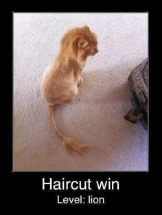 Hilarious Pictures of the day, 35 images. Haircut Win Level:lion