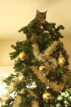 Here are ten adorable videos of cats climbing attacking and ruining Christmas trees. Here are ten adorable videos of cats climbing attacking and ruining Christmas trees. Cat Christmas Tree, Christmas Animals, Christmas Humor, Christmas Stocking, Merry Christmas, Cute Cats And Kittens, Kittens Cutest, Age Chat, Cute Baby Animals