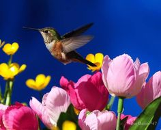 by The Hummingbird Whisperer