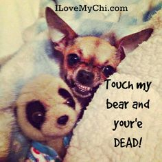 Don't touch my bear!