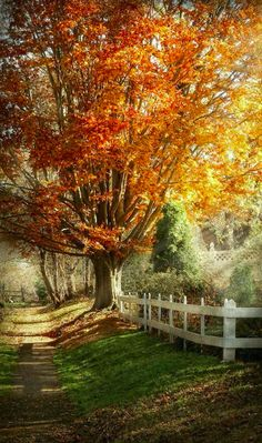 Autumn in Westfield, New Jersey • photo: Mike Savad on FineArtAmerica