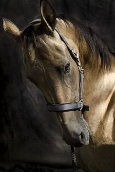 black and gold -- what a gorgeous animal: power and peace cheval All The Pretty Horses, Beautiful Horses, Animals Beautiful, Equine Photography, Animal Photography, White Photography, Arte Equina, All About Horses, Majestic Horse
