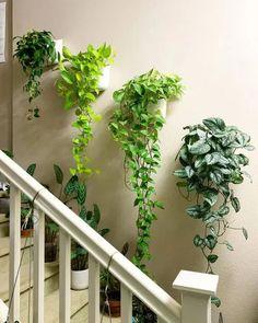 28 Artistic Plant Wall Art Ideas for Home Décor | Balcony Garden Web Inside Plants, Room With Plants, House Plants Decor, Plant Decor, Plants On Walls, Plants In Bedroom, Indoor Plant Wall, Indoor Plants, Wall Garden Indoor