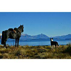 Caballo Criollo en La Patagonia
