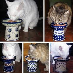 Classy raised cat feeders, DIY with a flower pot and saucer! Might try next time I do paint your own pottery. Looks like Polish Pottery to me! I Love Cats, Crazy Cats, Cat Feeder, Animal Projects, Pottery Designs, Cat Crafts, Polish Pottery, Here Kitty Kitty, Cat Furniture