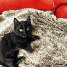Мобильный LiveInternet Притча о кошке. Sueellen Ross. | lorikshink - Дневник lorikshink |