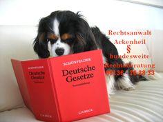 Tierrecht | Hunderecht : http://www.tierrecht-anwalt.de , http://www.der-tieranwalt.de bundesweite Rechtsberatung Tieranwalt Andreas Ackenheil  Tierrechtskanzlei