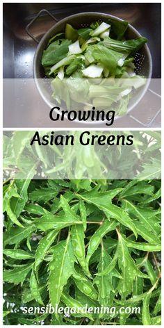 Growing Asian Greens with Sensible Gardening.
