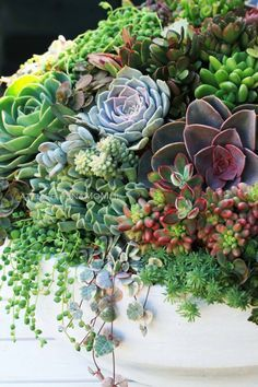 Succulents # Succulents # Succulents # Collection # Arrangement – Succulent diy ideas - How to Make Gardening Colorful Succulents, Growing Succulents, Succulents In Containers, Cacti And Succulents, Planting Succulents, Cactus Plants, Garden Plants, Planting Flowers, Succulent Gardening