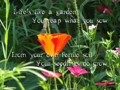 Life Is Like A Garden.