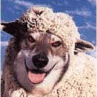 MI RINCON ESPIRITUAL: Ovejas con piel de lobo